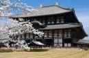 Cơ hội du học Nhật Bản với học bổng Misubishi UFJ Foundation 2013