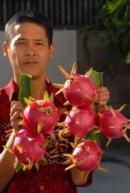 Người Việt trồng hoa, quả bán Tết 2013 ở Hoa Kỳ