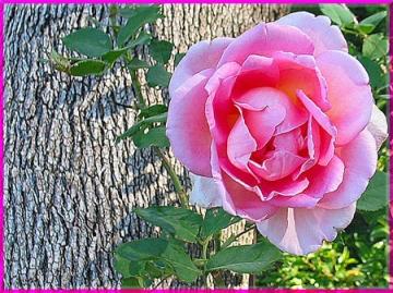 Ý nghĩa các loài hoa trong tình yêu