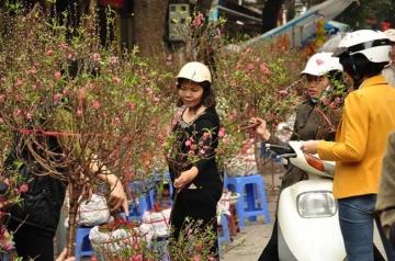 Thị trường hoa Tết Hà Nội vẫn ảm đạm những ngày cuối năm