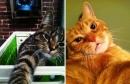 Khi mèo cũng thích chụp ảnh \