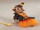 Những hình ảnh kỳ quái trong ngày Halloween của các chú chó