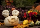 Tin nhắn Halloween, tin nhắn hình ngày Halloween lãng mạn