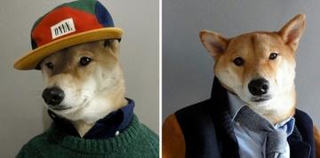 Những chú chó với phong cách thời trang sành điệu
