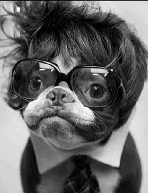 16 chú chó với gu thời trang sành điệu hơn cả con người 7