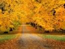 Tuyển tập những bài thơ tình mùa thu lãng mạn nhất