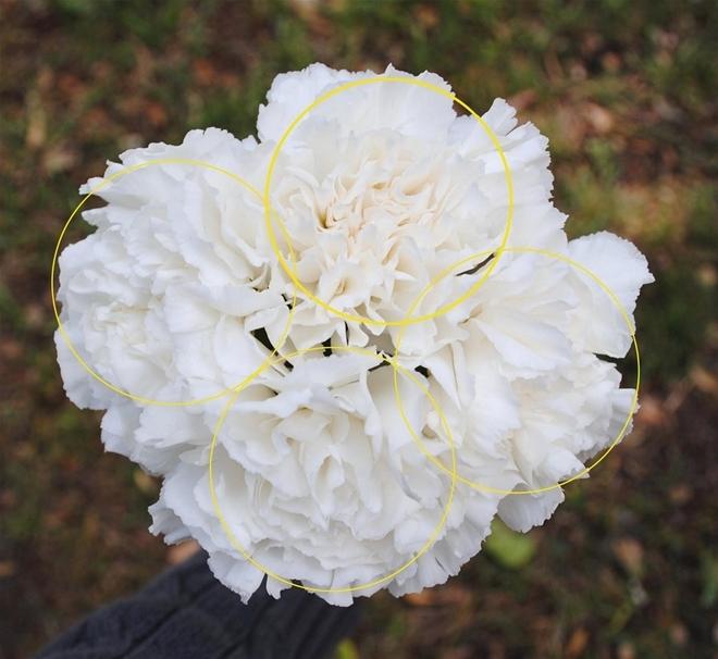Câu lạc bộ handmade: Hướng dẫn cách cắm hoa và thuyết trình cắm hoa ngày 20/10 Huong-dan-cach-cam-hoa-va-thuyet-trinh-cam-hoa-ngay-2010_1412824313_8