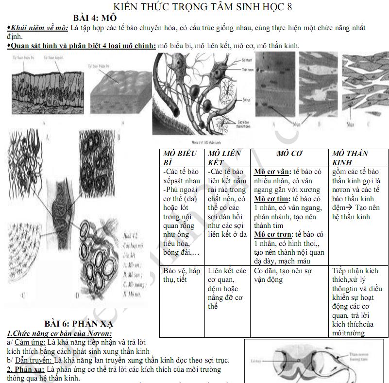 Hướng dẫn ôn tập kì 1 lớp 8 môn Sinh 2017 - THCS Trần Văn Đang