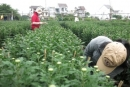 Việc làm thêm tết 2014: Sinh viên làm vườn kiếm thêm thu nhập