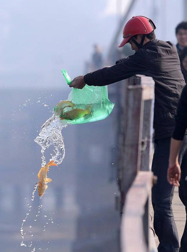 Thả cá từ trên cao rất có thể làm cá bị chết.