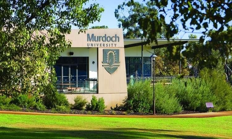 Học bổng ĐH Murdoch, Úc cho sinh viên quốc tế 2017-2018