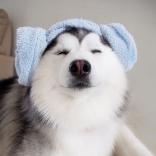 Totoro tốt bụng